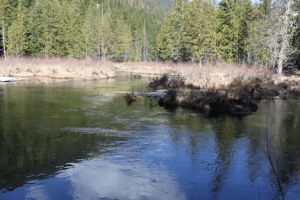 Locals have fished at the Meadows in Duhamel Creek for many generations photo credit - Duhamel Watershed Society