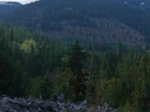 Logging site seen from east side of creek on Heddle Road photo credit - Randi Jensen